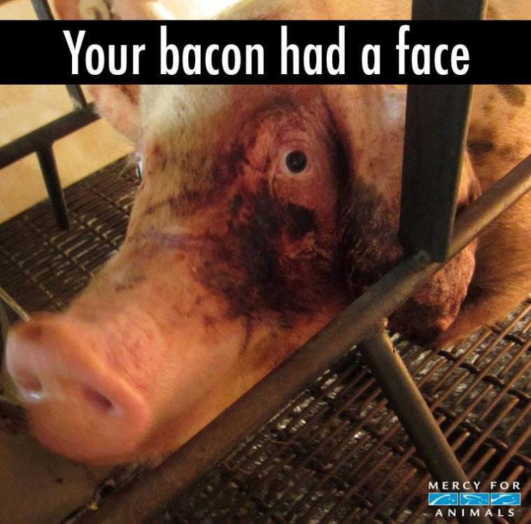 your bacon had a face