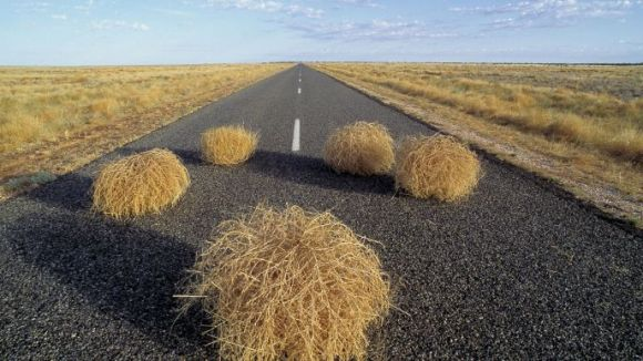 208_tumbleweed-on-the-road